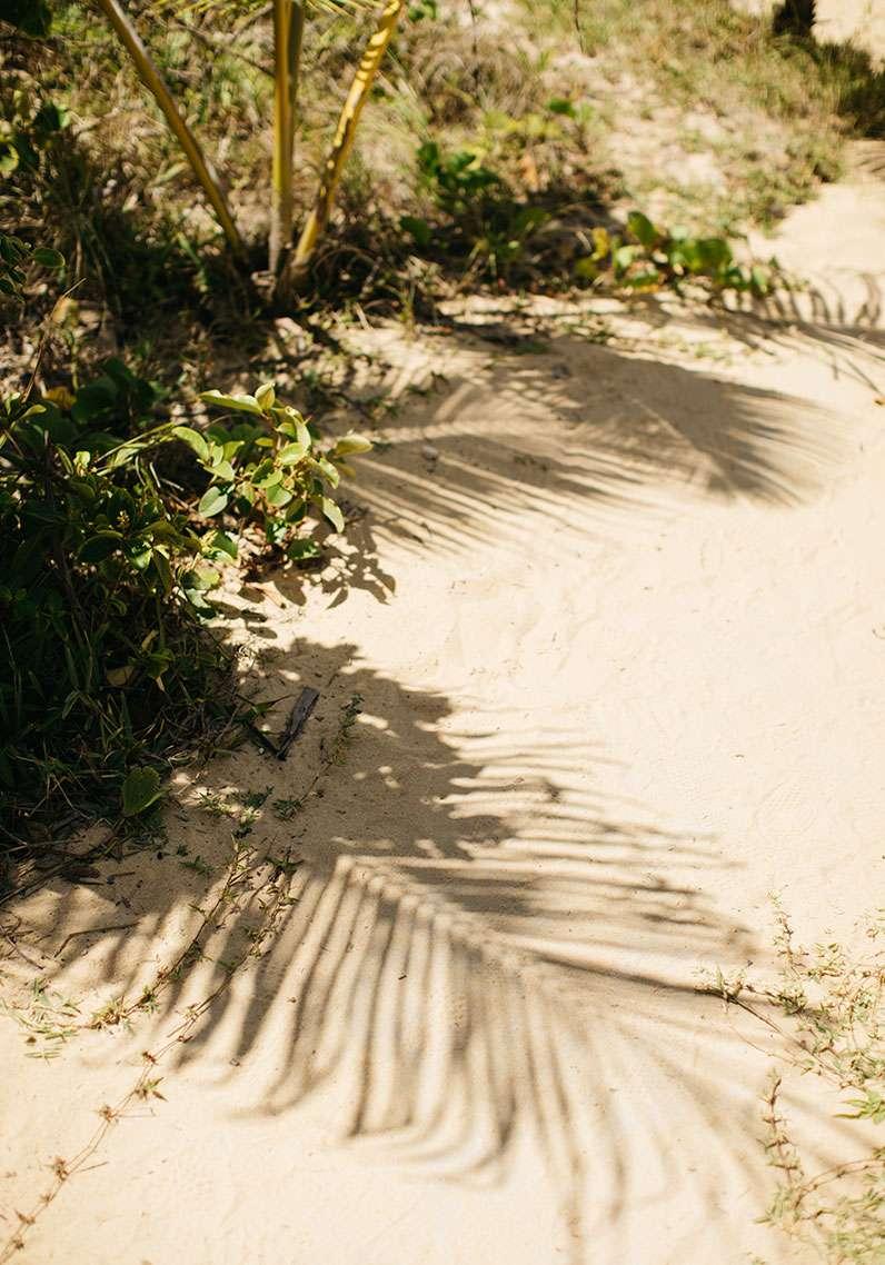 palmier sable plage